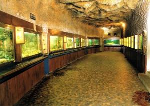 Aquarium d'Arcachon