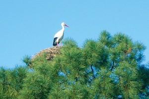 Découverte de la nature, Parc ornithologique du Teich
