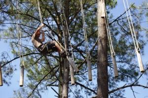 Dans les arbres du parc Bassin Aventure